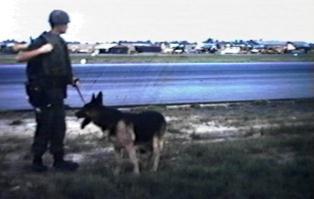 K-9 patrolling along Da Nang Runway