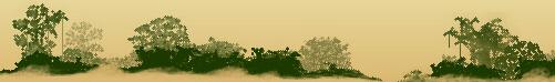 Vietnam Rain Forest