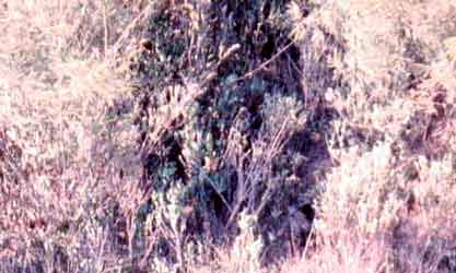 Wild Child II: Angel of Mercy, Huey Chopper. NVA Sniper hiding in a tree. 1968.