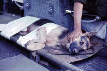 Wild Child II: Angel of Mercy, Huey Chopper. Crewman with Wounded In Action K-9 War Dog. 1968.