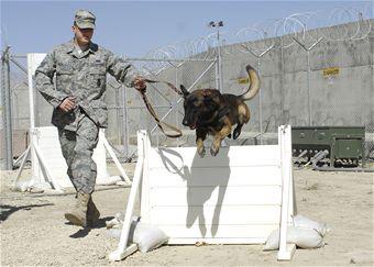 USAF 56th SFS, K-9 Mayo, Military Working Dog. 2009.