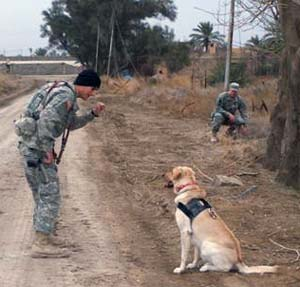 2. Army MWD Cooper, KIA 6 July 2007. 94th Mine Dog Det, 5th Engineer Bn, 1st Engineer Brigade.